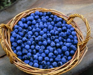 Wicker basket filled with sloes